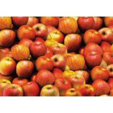 사과(저농약/2kg/합천)